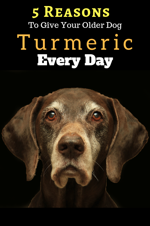 5 Reasons To Give Your Older Dog Turmeric Every Day Dog Insurance Dog Care Tips Dog Nutrition