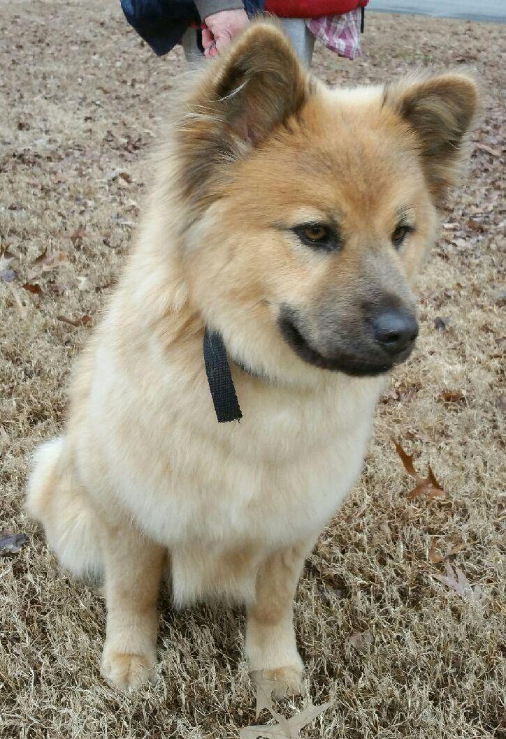 Adopt Joy On Adoption Pets Dogs