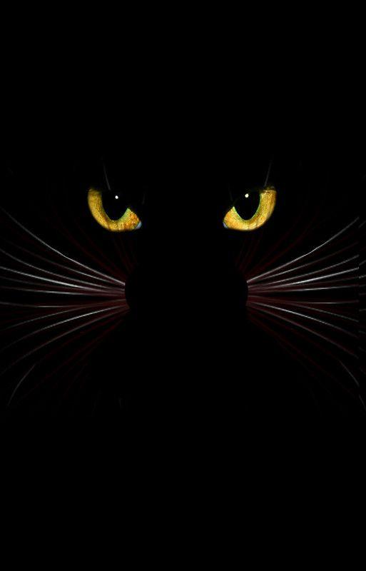 Black Cat Floor Pillow By Sandnotoil Black Cat Art Cat Art Cat Painting