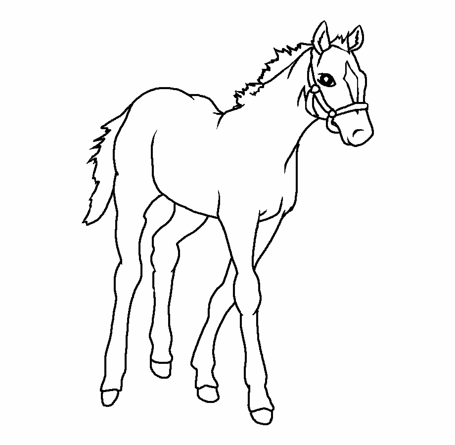 Baby Horse Drawing Images Pictures Horse Drawing Images Easy Horse Drawing Horse Drawings [ 899 x 920 Pixel ]