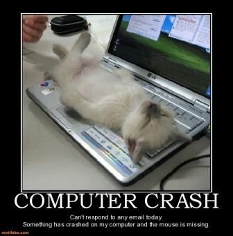 Cute Kitten Computer Crash