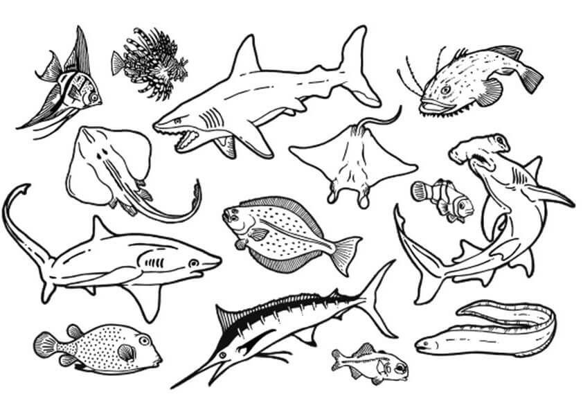 система картинки раскраски животный мир морей и океанов специально днём