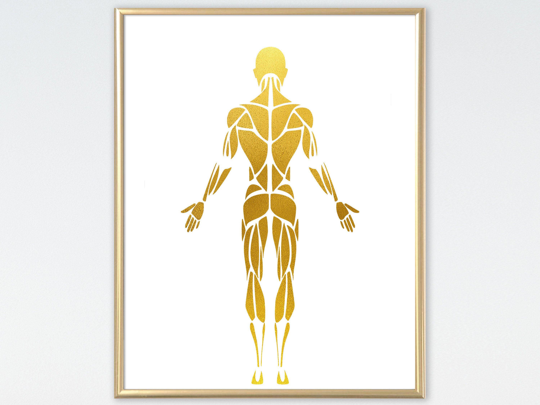 Male Muscular System Anatomy Human Body Golden Art