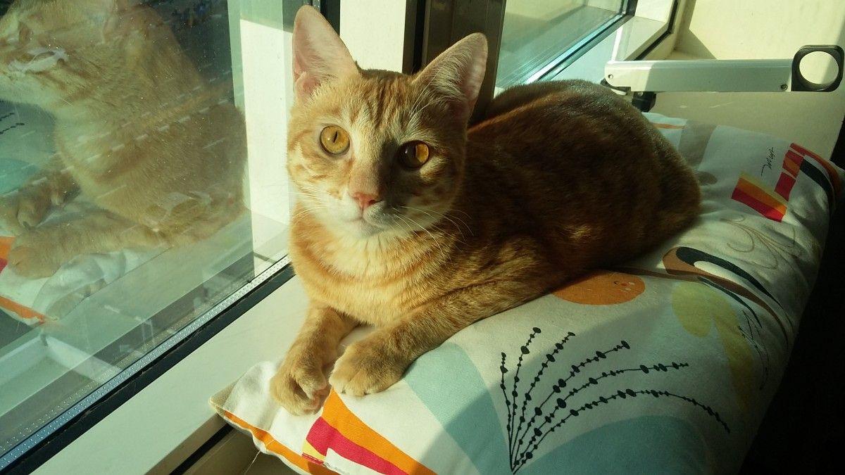 Cat For Adoption Cats Dubai Adopt My Pets Cat Adoption Cats Pets Cats