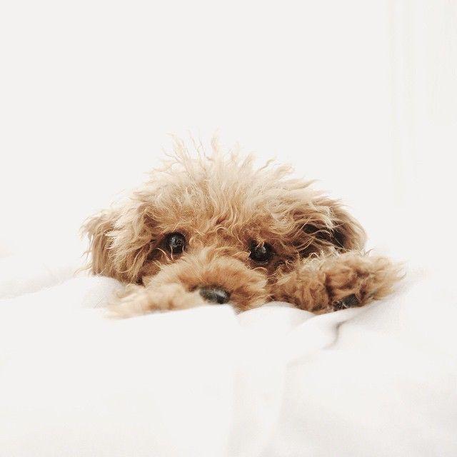 Pin Van Mhairi Op Dogs Puppy S Hondjes Schattigste Dieren