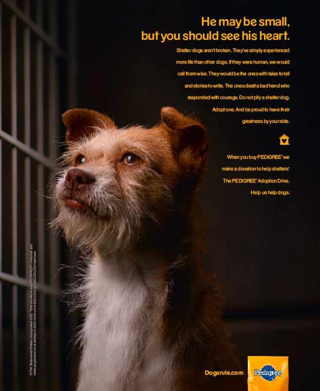 Adopt A Shelter Dog And Be Proud To Have Their Greatness By Your