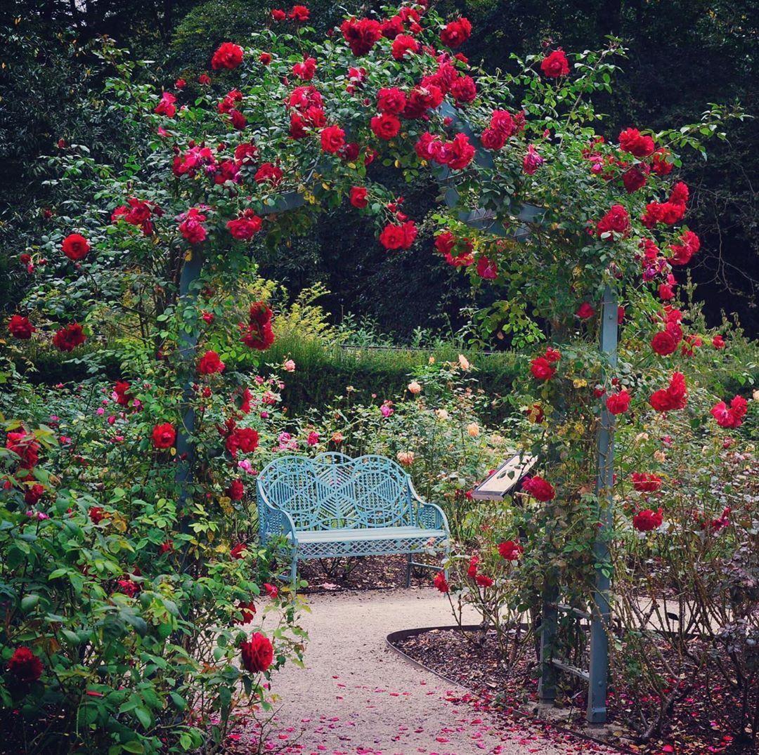 Cliveden S Rose Garden National Trust Gardens Reinstated In