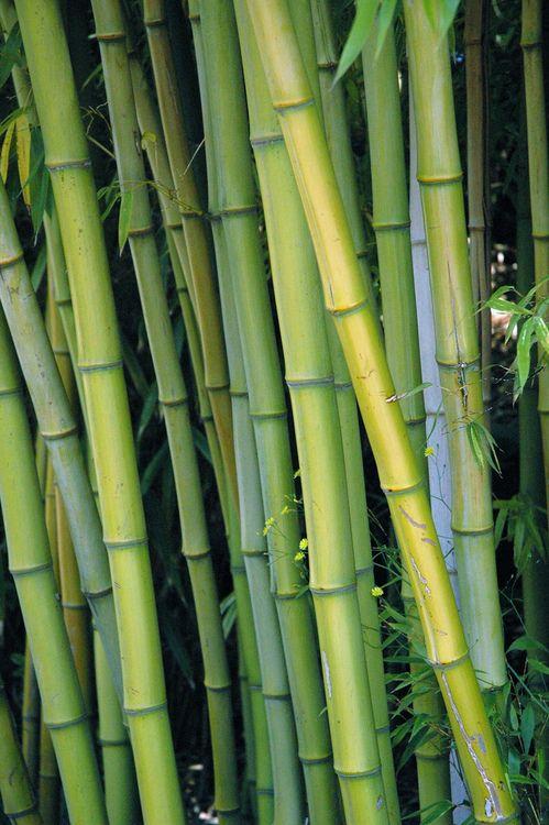 Massageraum farbe  Pin von Tina Wagner auf Bambus | Pinterest | Bambus, Grün und Form ...