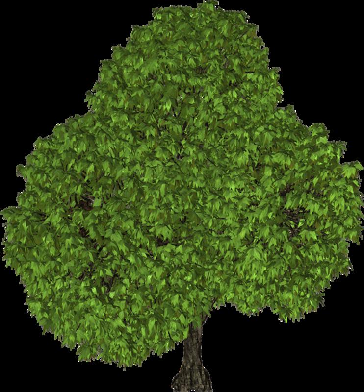 Гифки деревья и кустарники