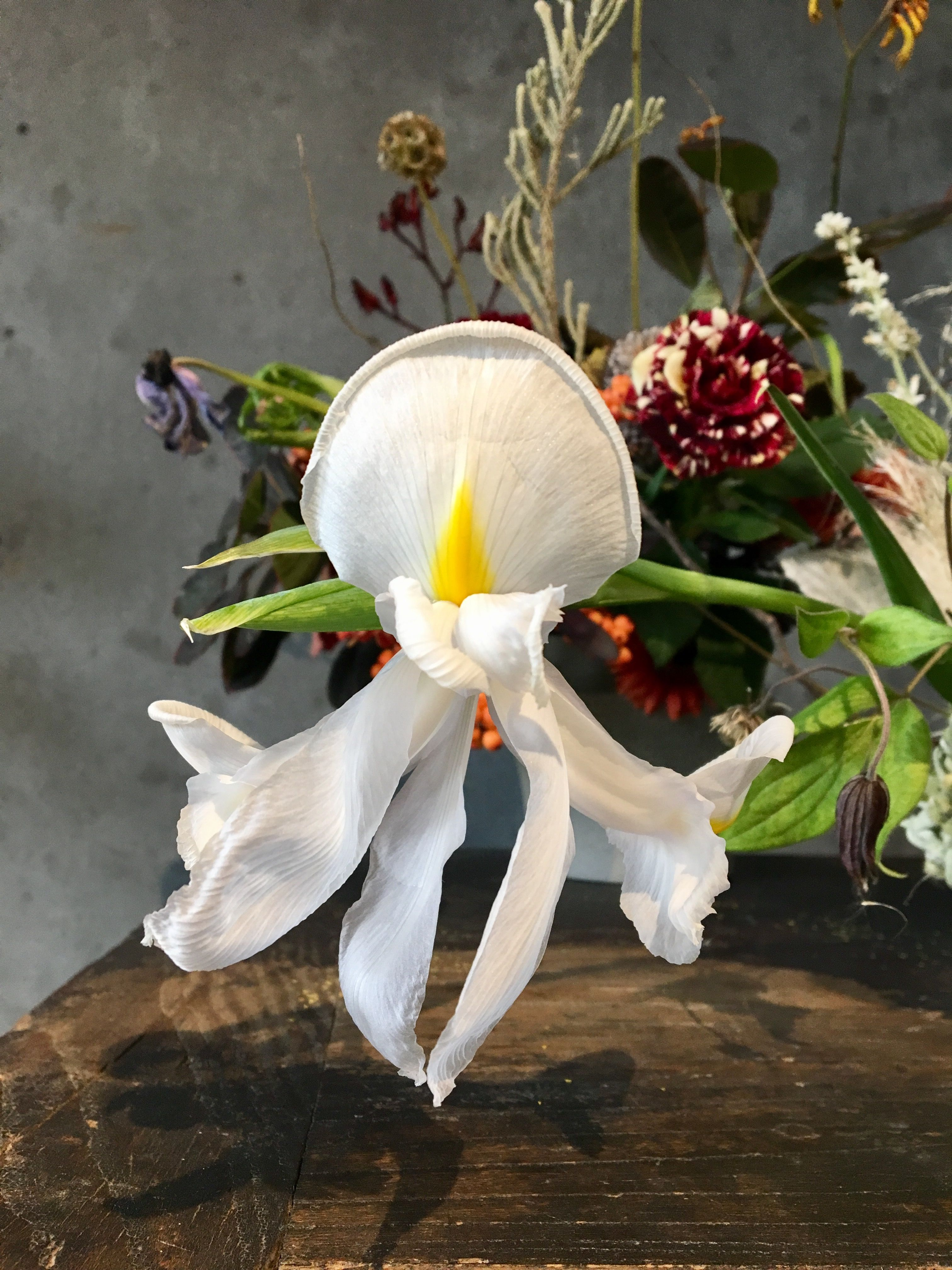 Not Sure What Flower This Is But Its Like A Floating Angel