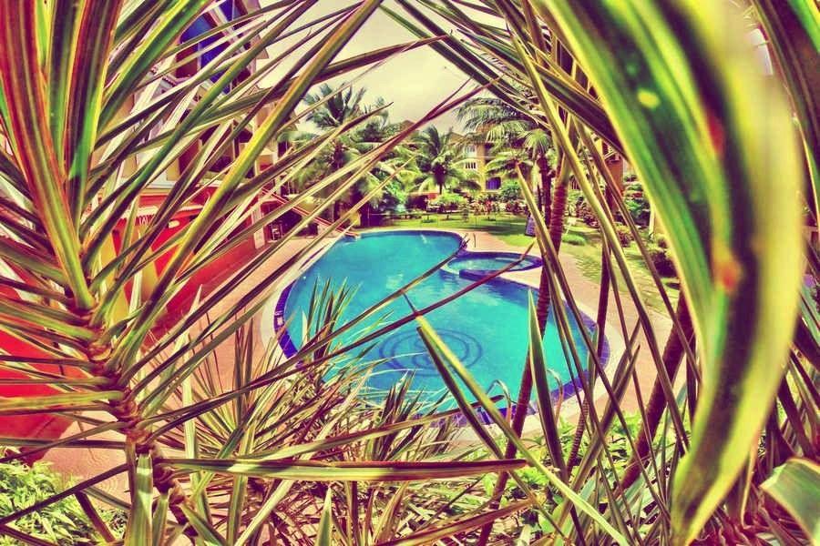 Peek a Boo..What do you see? A relaxing & calm pool day ahead For Bookings. Contact:- 8380810000 #VillaGoa #villasingoa #rentvilla #LuxuryVillasinGoa #luxuryhomes #micasasucasa #PrivatePoolVillas #Goa #Travel #TravelGoals #Traveller #traveltogoa #Travelwithfriends #travelwithfamily #exploregoa #pool #instatravel #luxurystay #weekendgetaway #weekendvibes #Vacay #staycation #holidays #beautifuldestinations #YOLO #airbnb #curlytales #lbbgoa #goodvibes