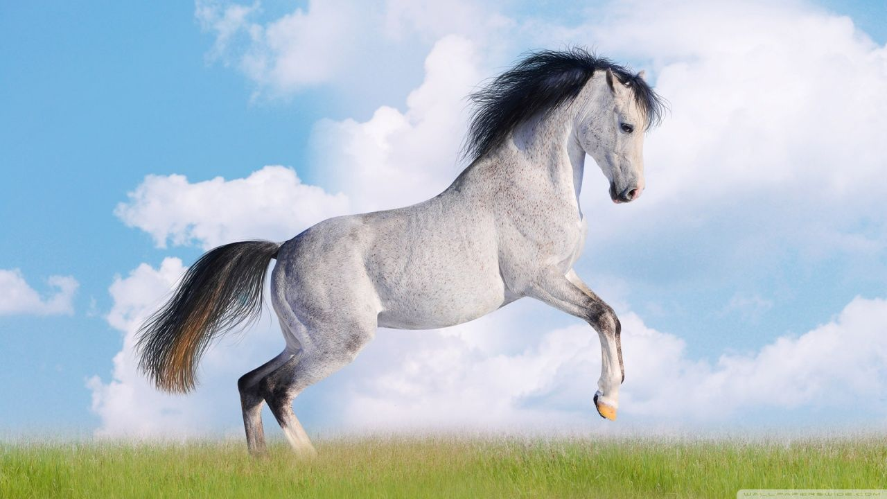 Cool Wallpaper Horse Ipod Touch - 969152bdb04ac0af85556df7e688bf9d  Image_75225.jpg