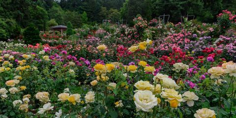 These Are The Flowers That'll Thrive in Your Shady Yard is part of Shade garden plants, Best perennials for shade, Best plants for shade, Shade plants, Purple flowering plants, Types of roses - Even that dark, wet corner you've neglected for years
