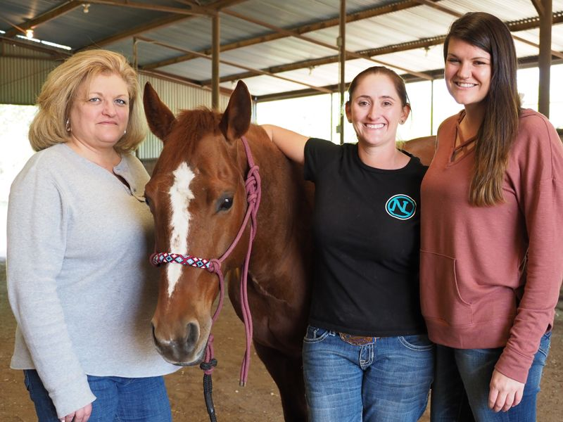 Pin on Equine Assisted Psychotherapy and Equine Assisted