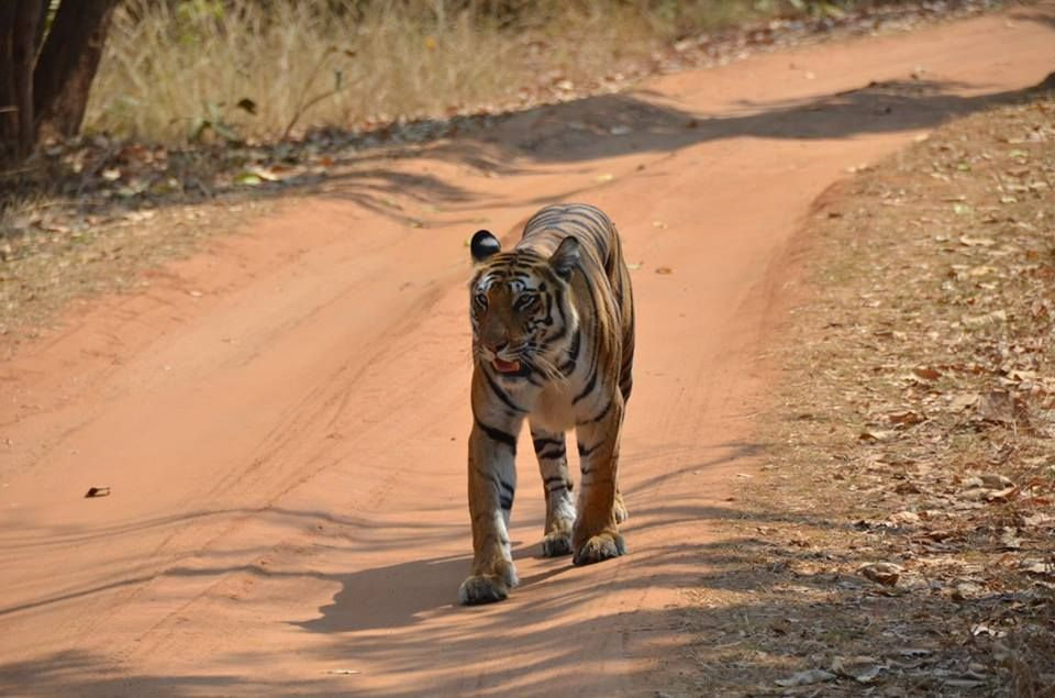 Bandhavgarh meadows a resort near Tala zone assists for