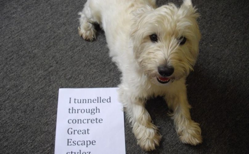 11 Dogs of Dog Shaming Who Think They Are Masters Of Escape