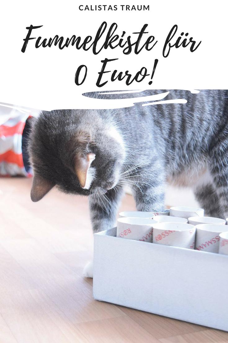 Diy Katzenspielzeug Fummelkiste Calistas Traum Katzen Spielzeug Katzenspielzeug Katzen Geburtstag