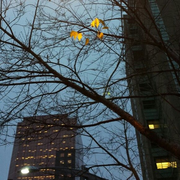 Perfectly lit leaves  06/11/2014