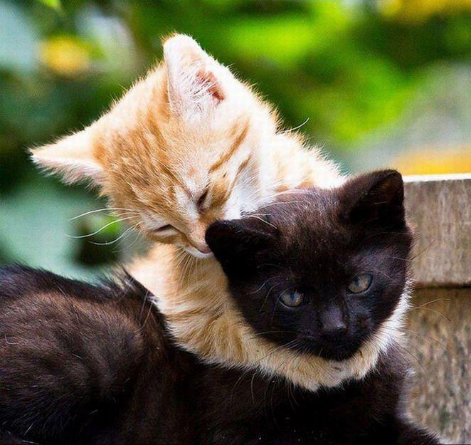 2 chats qui se font un calin