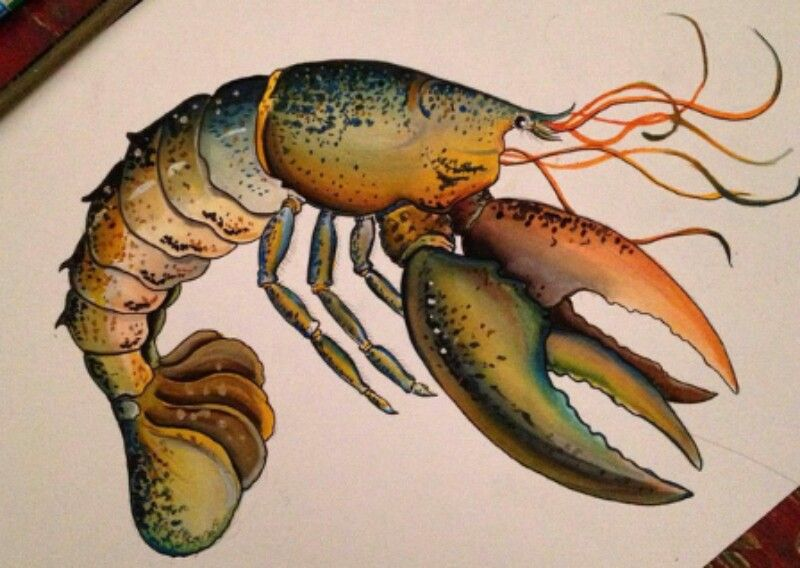 Lobster DrawingColor Pencil DrawingsColored PencilsColoring BooksLobstersAnimal KingdomFishMosaicsColor