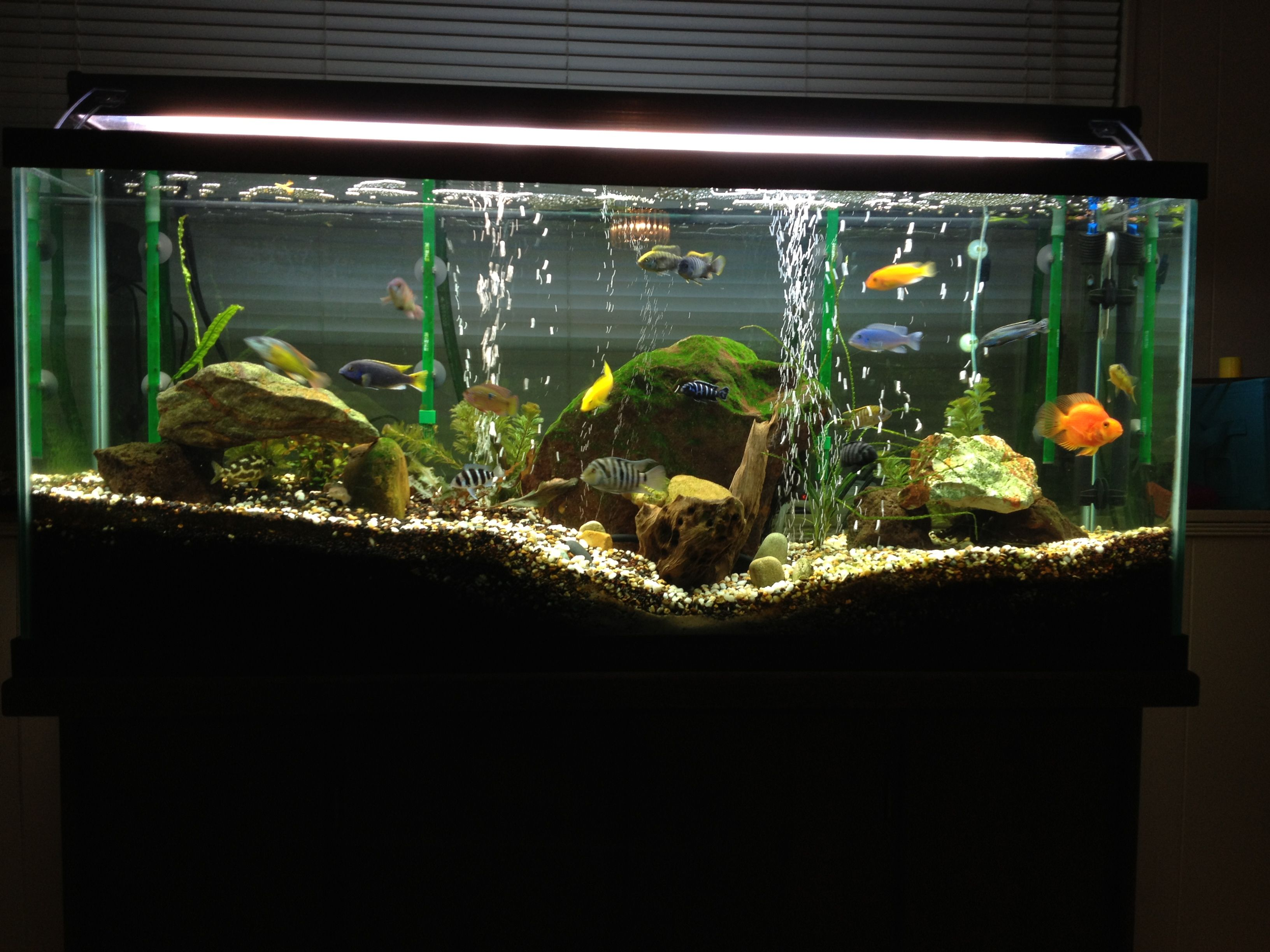 Cichlid aquarium with live plants.