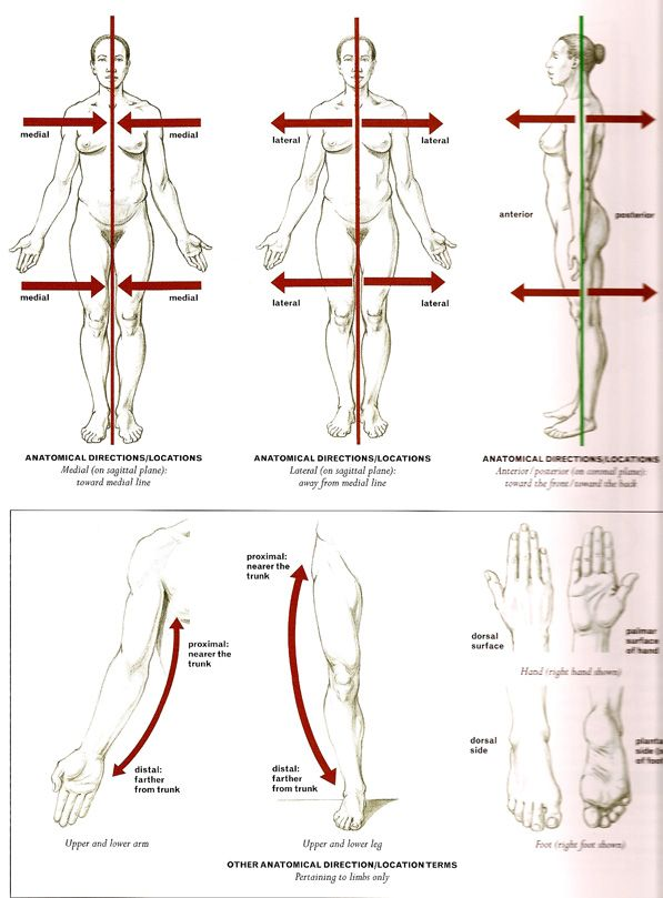 anatomy vocabulary - Google Search | Anatomy and Physiology ...