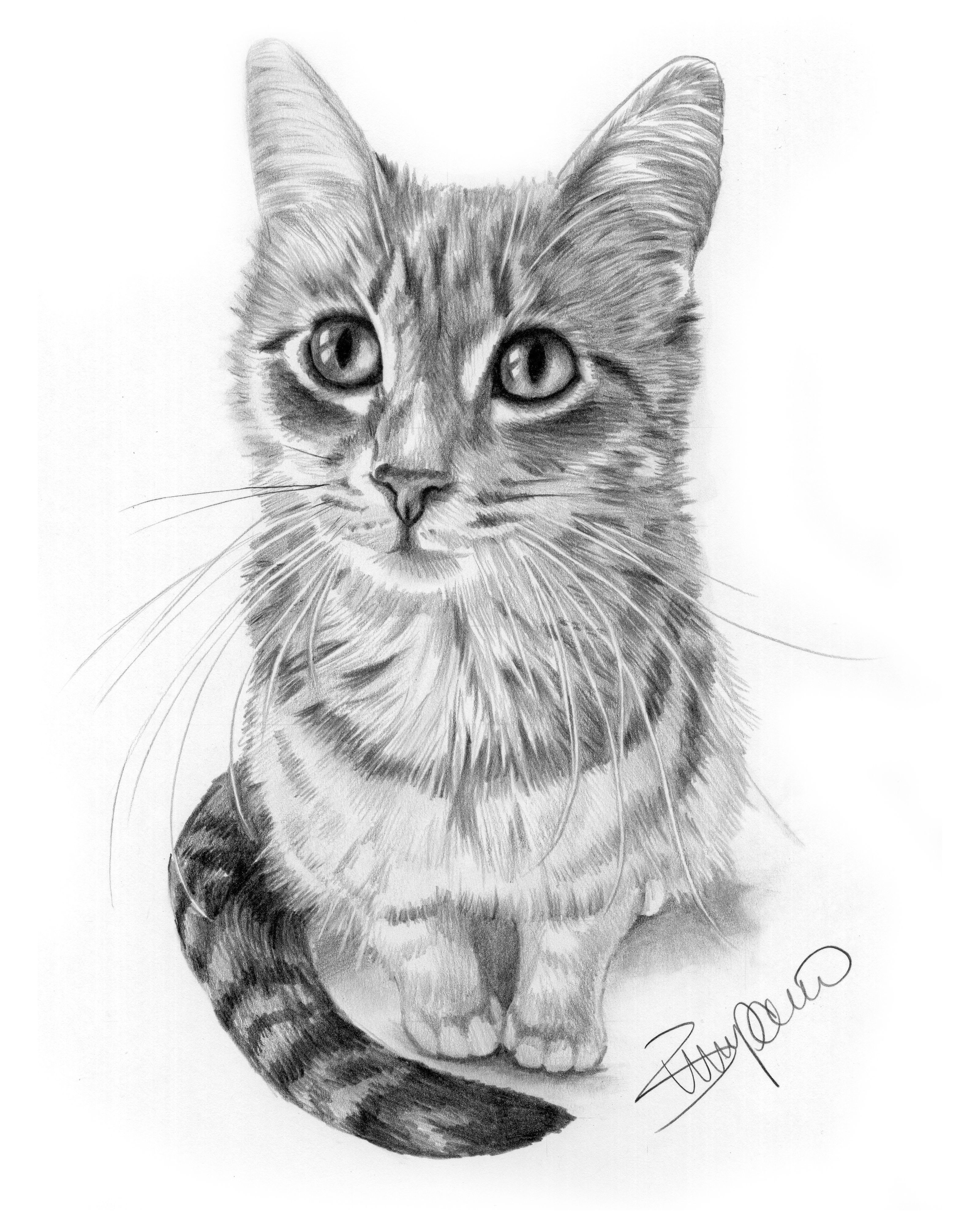 Cat pencil drawing by wendy zumpano www pencilportraitcards com