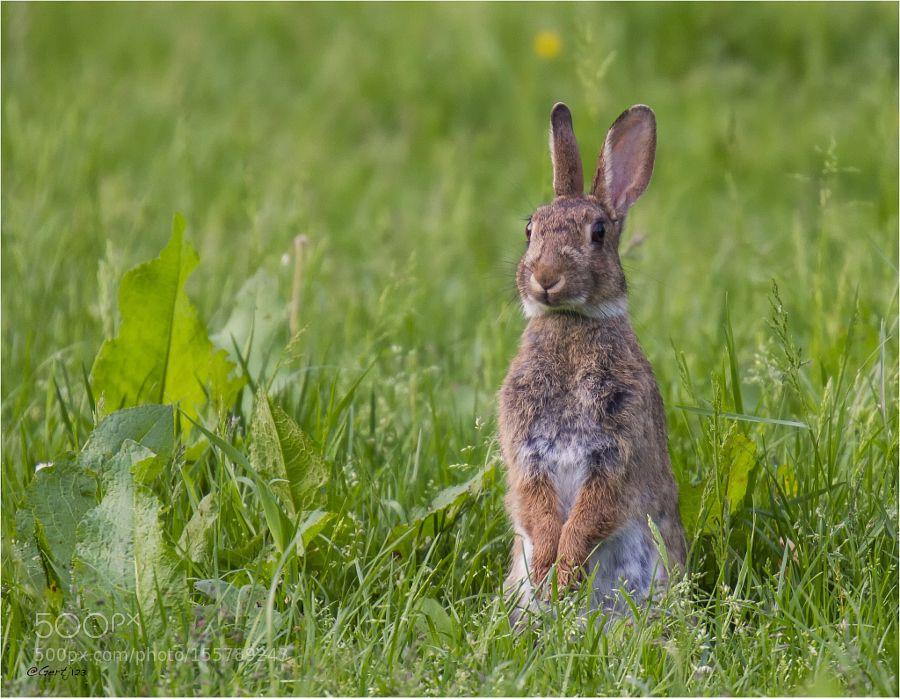 Rabbit by gjterhorst via http://ift.tt/1WRXAT8
