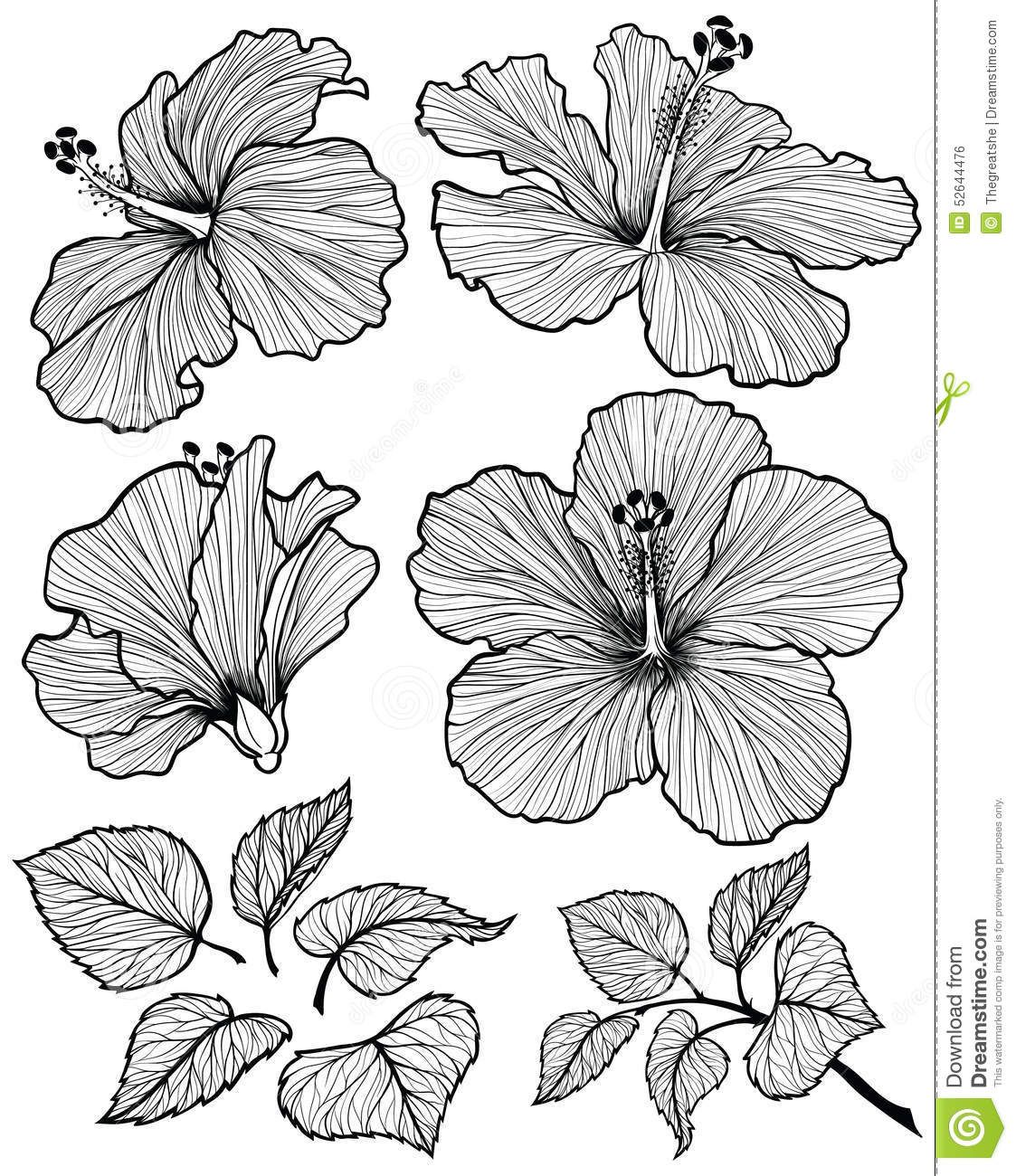 Tropical Flower Line Drawing : Hibiscus flower graphic head set with leaves and branch