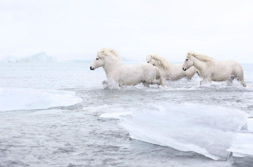 Image result for drew doggett iceland horses