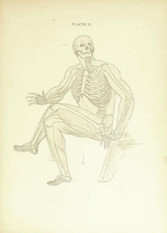 Nemfrog Plate 71 The Skeleton Of A Man In The Sitting Position