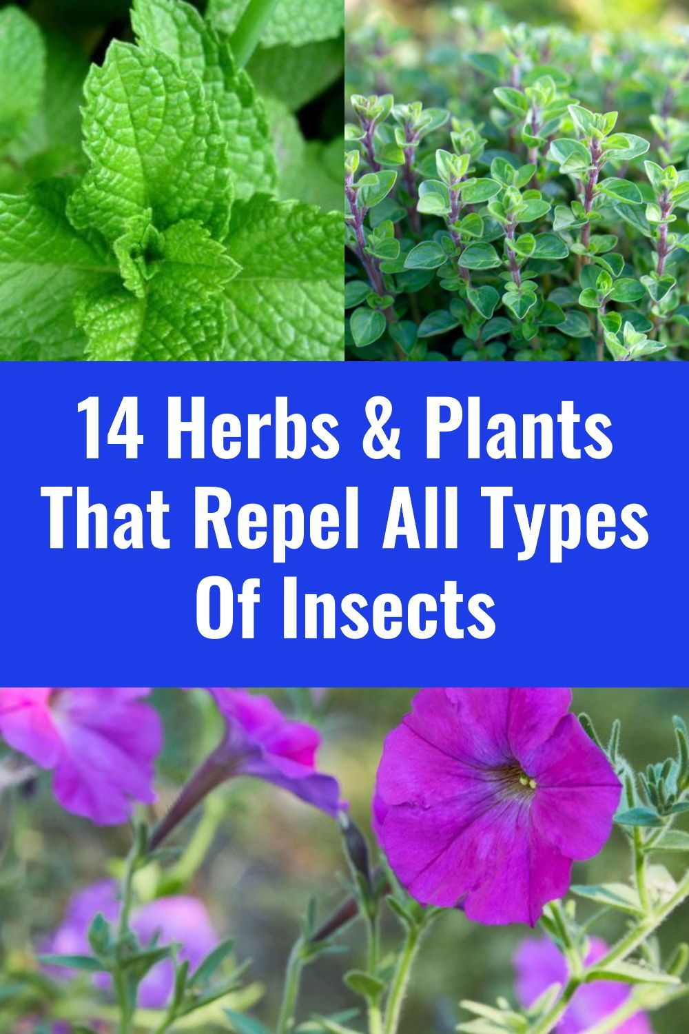 14 Herbs Plants That Repel All Types Of Insects In 2020 Insect Repellent Plants Planting Herbs Herbs