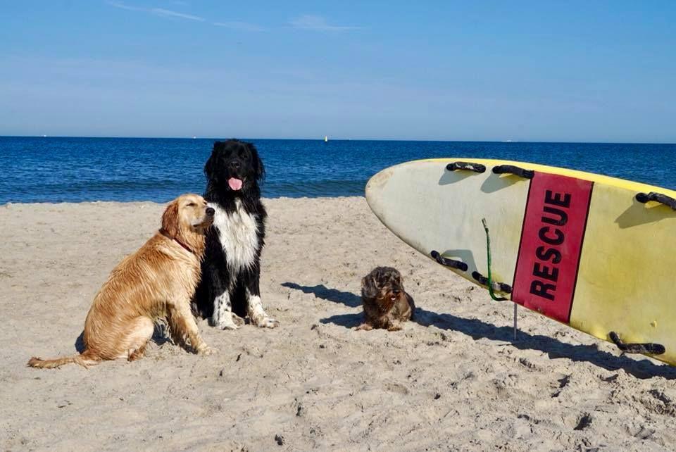 Baywatch War Gestern Was Sagt Ihr Zu Diesen Strandschonheiten Danke An Annette Fur Das Bild Holland Hundef Mit Bildern Hunde Hundestrand Ferien Mit Hund