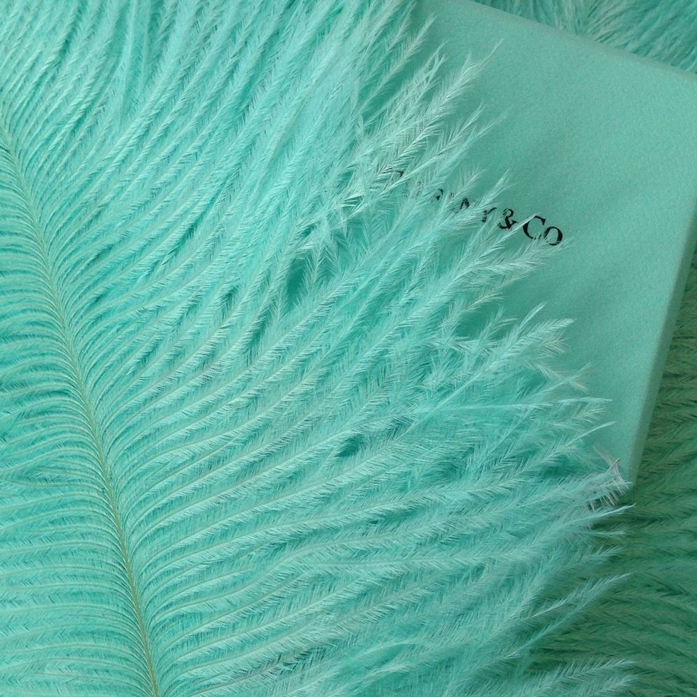 Tiffany Blue color Ostrich Feathers 14-16 inches 12 Pieces 1 Dozen (USA Seller) #FeatherParadise