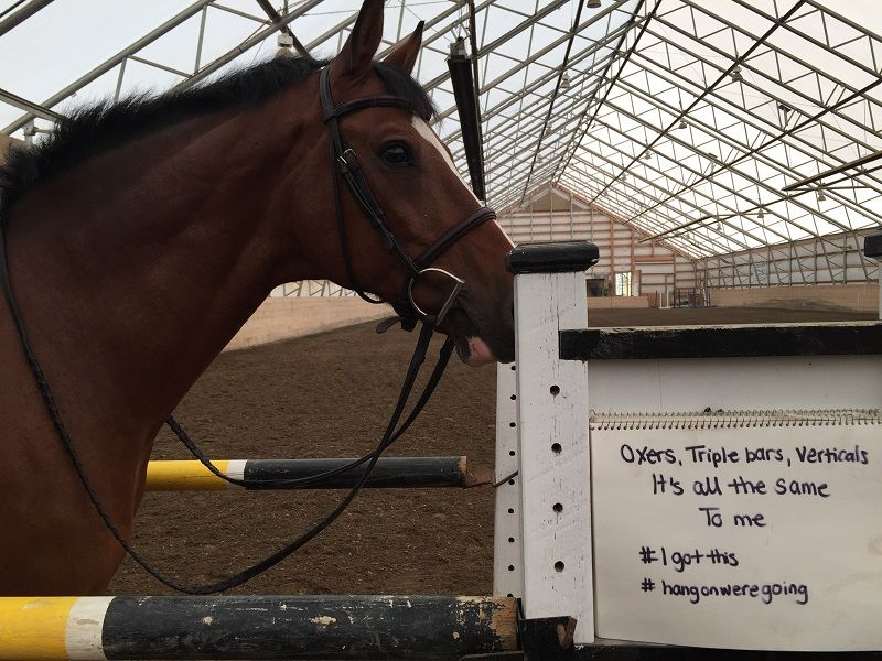 equine psychology, horse psychology