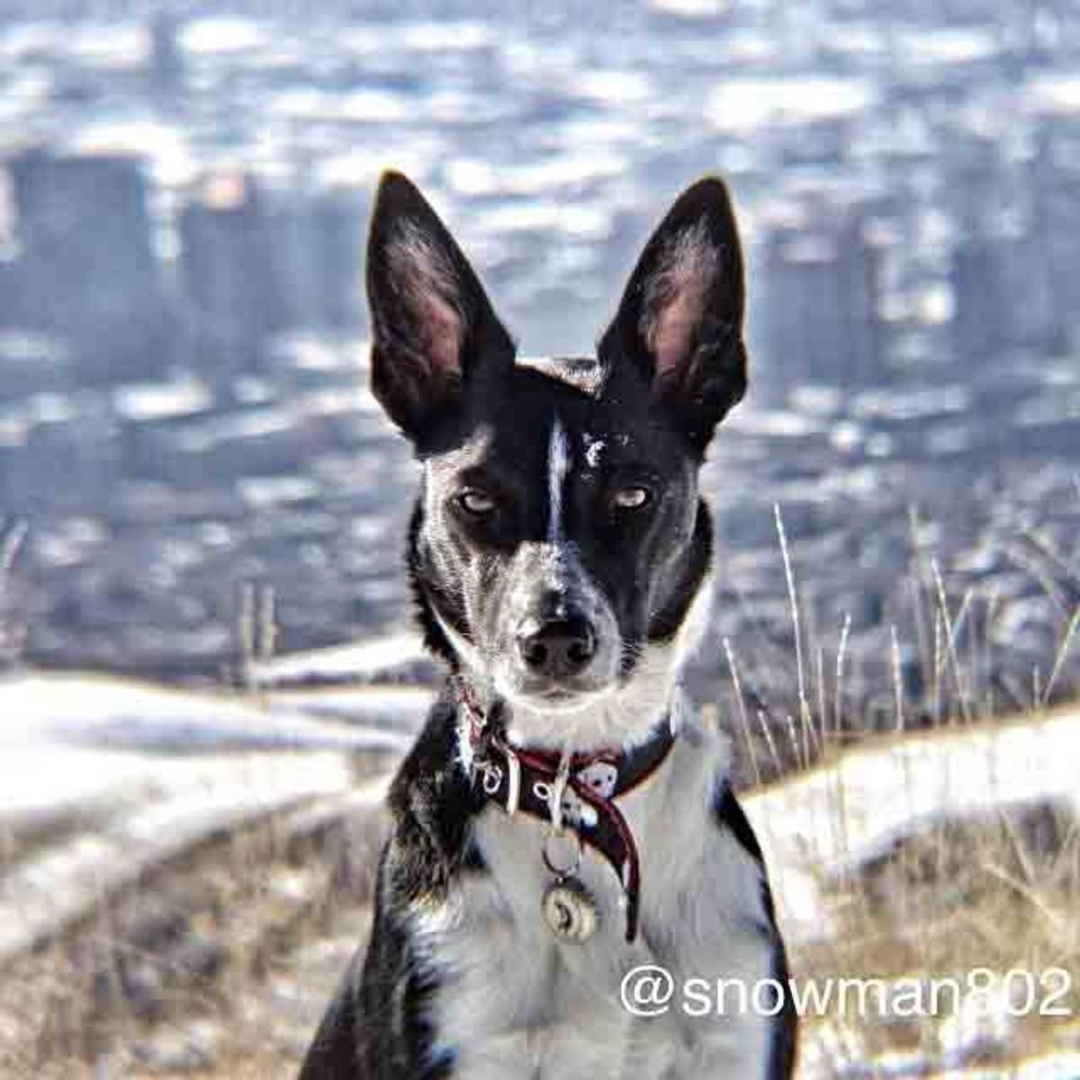 Eldoradog Put On Her Serious Border Collie Face For This Shoot In The Foothills Of Slc Utah Saltlakecity Salt Lake City Hotels Lake Lake Photography
