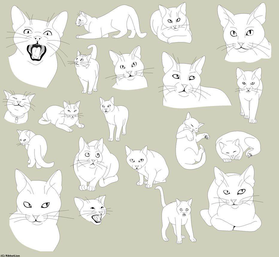 Cat Base Poses