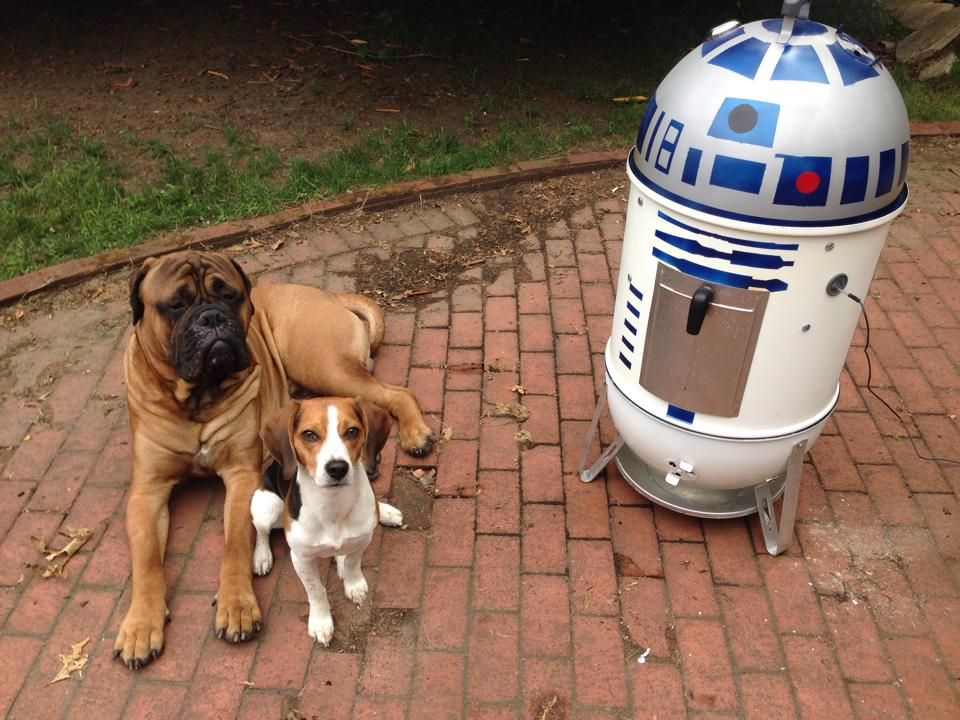 Both The Bullmastiff And Beagle Awaiting The Ribs Now And Uhm