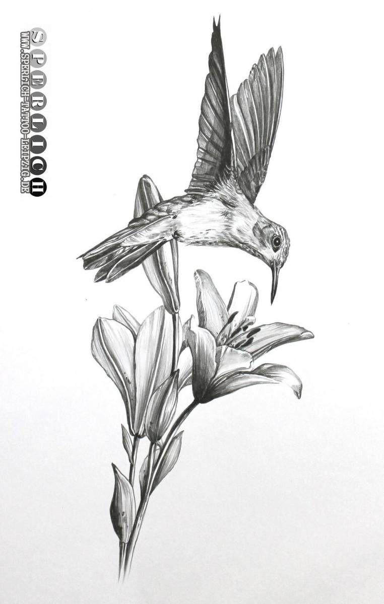 Kolibri Stock Photos And Royalty Free Images