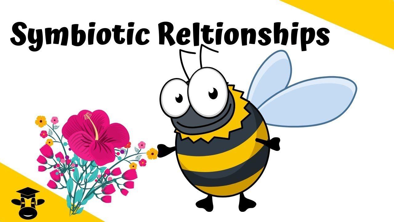 Symbiotic Relationships Symbiotic Relationships Relationship Science Videos [ 720 x 1280 Pixel ]