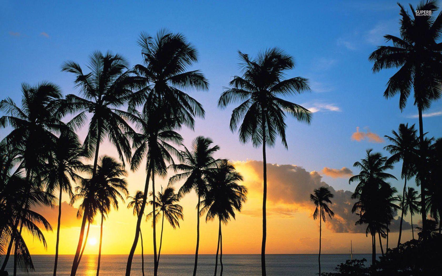 Palm Trees Silhouette HD desktop wallpaper Widescreen High