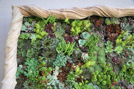 Flora Grubb Panels Let You Design Your Own Vertical Garden Vertical Garden Diy Vertical Succulent Gardens Succulents