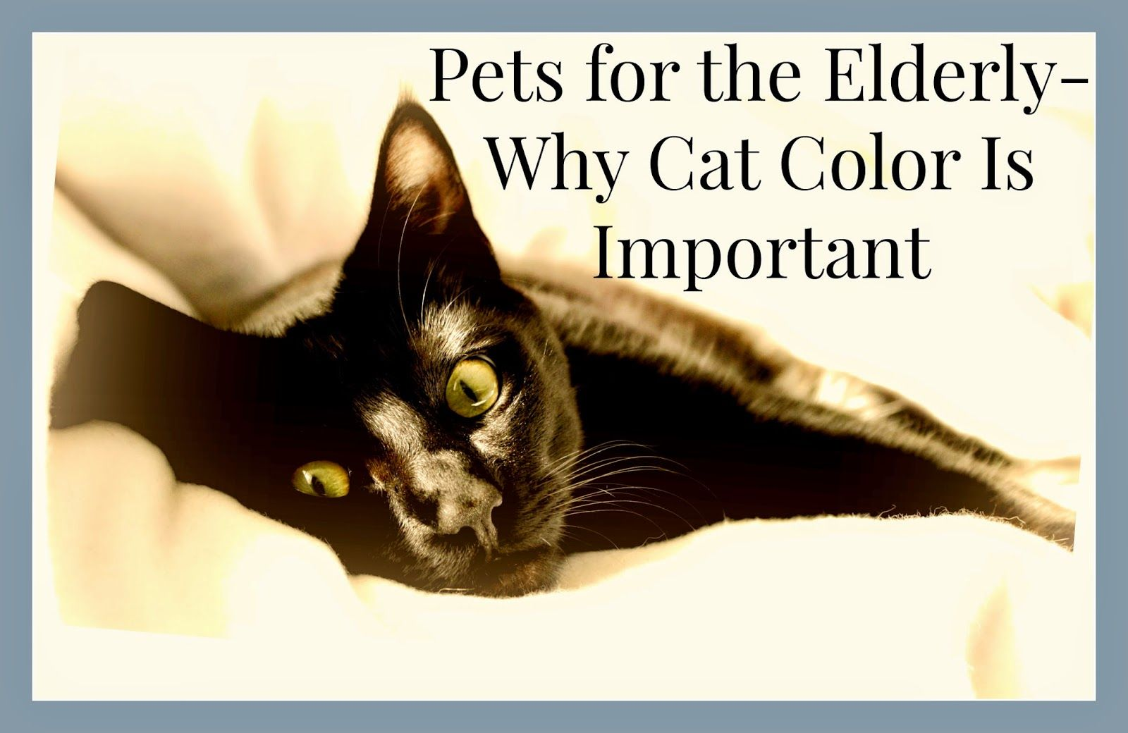 How cat coloration can be important when choosing a pet