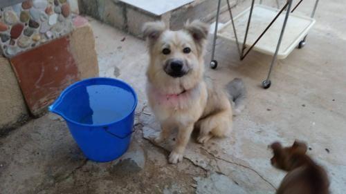 Adozioni dalla Sicilia » Fbsocialpet.com: il social per cani, gatti, cavalli, tutti gli animali