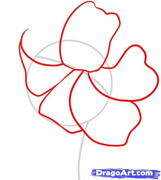 how to draw a tiger lily step 2