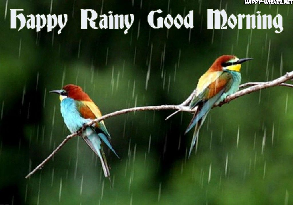 30 Good Morning Wishes For A Rainy Day Most Beautiful Birds Birds Beautiful Birds