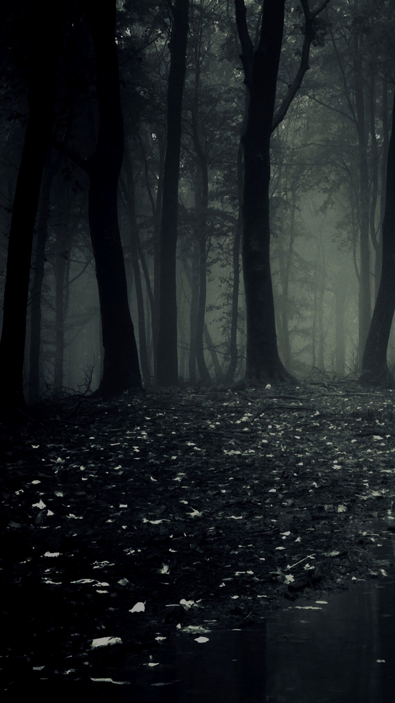 Download Dark Forest Wallpaper Phone And Share It With More People