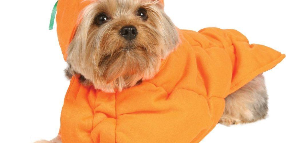 Halloween Safety Tips  sc 1 st  Pinterest & Halloween Safety Tips | Pet Health u0026 Safety | Pinterest | Pet health ...