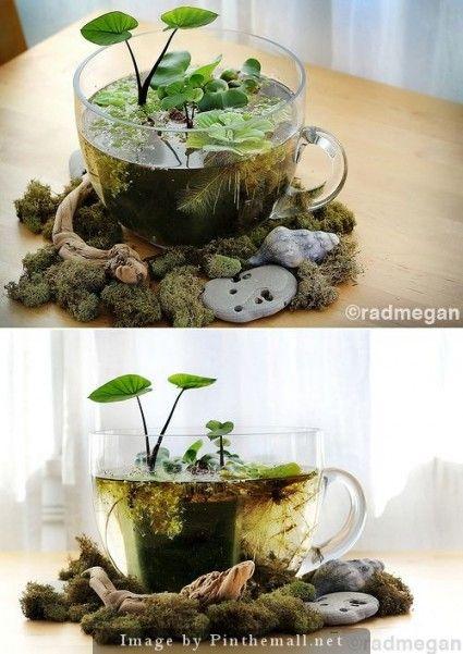 DIY – Indoor Mini Water Garden #DIY #watergarden