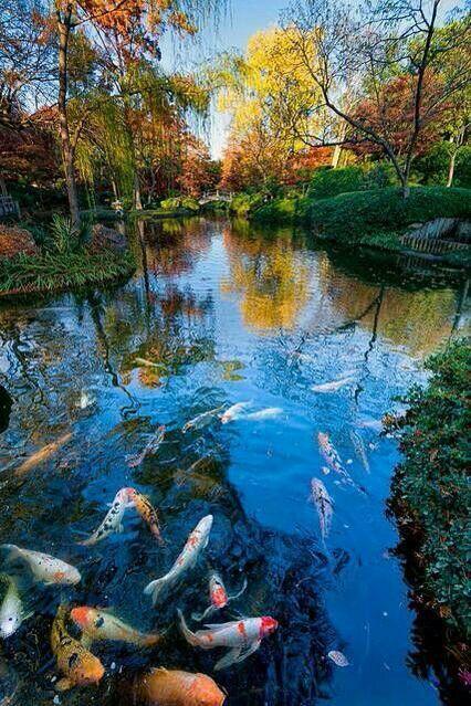 Estanque con peces animales aves plantas etc for Estanques de jardin con cascadas para peces